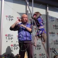 Jubei, a 26-year-old Japanese macaque, walks on stilts as his trainer, Yasutaka Kawabe, calls out instructions at a recent show in Seto, Aichi Prefecture. | CHUNICHI SHIMBUN