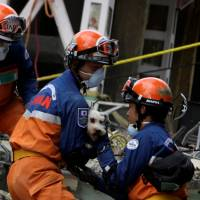 Members of a Japanese rescue team hold a dog found Sunday underneath the rubble of a multi-family residential building that collapsed in Mexico City from an earthquake earlier in the week. | REUTERS