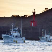Fishing boats return to port in the town of Taiji, Wakayama Prefecture, on Friday, the first day of the annual dolphin hunt. The event was suspended by high waves caused by an approaching typhoon. | KYODO