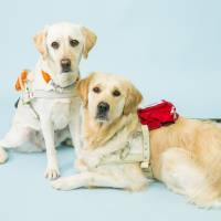 COURTESY OF THE JAPAN GUIDE DOG ASSOCIATION