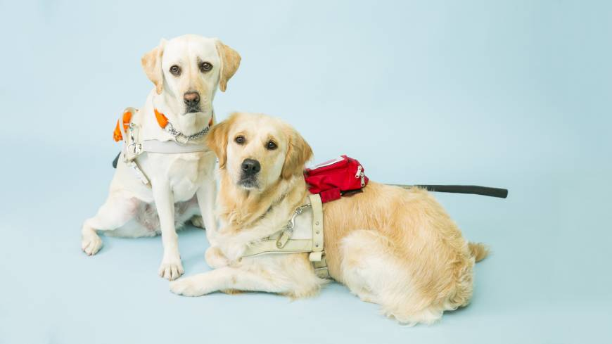 A ruff guide to Seeing Eye dogs in Japan