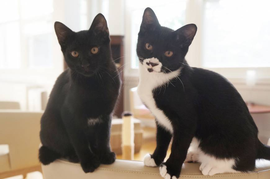 Mischief makers: kittens named Preto and Melas