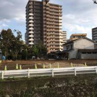 Call that progress?: In the city of Kumamoto, a Meiji Era house and its beautiful old Japanese-style wall were knocked down recently, with 90 percent of its trees torn down too. The small area left at the back gives an idea of what the trees were like in the main garden. The plot is now a car park. | SEAN MICHAEL WILSON