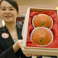 A pair of persimmons that fetched ¥540,000 at an auction is presented to the media Thursday at a department store in Nagoya. | KYODO