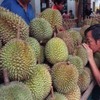 A customer sniffs the 'king of fruits,' the exotic Asian durian, in downtown Singapore in 1999. | REUTERS