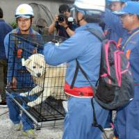 The Environment Ministry, in revised guidelines for local governments, will stress that owners are responsible for their pets' safety when disasters strike.   KYODO