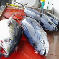 Wholesale prices for bigeye tuna are surging due to poor catches and tougher regulations. | KYODO