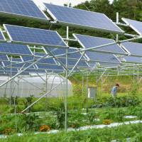 A solar sharing system combines power generation with agriculture on a farm in Fukushima Prefecture. | KYODO