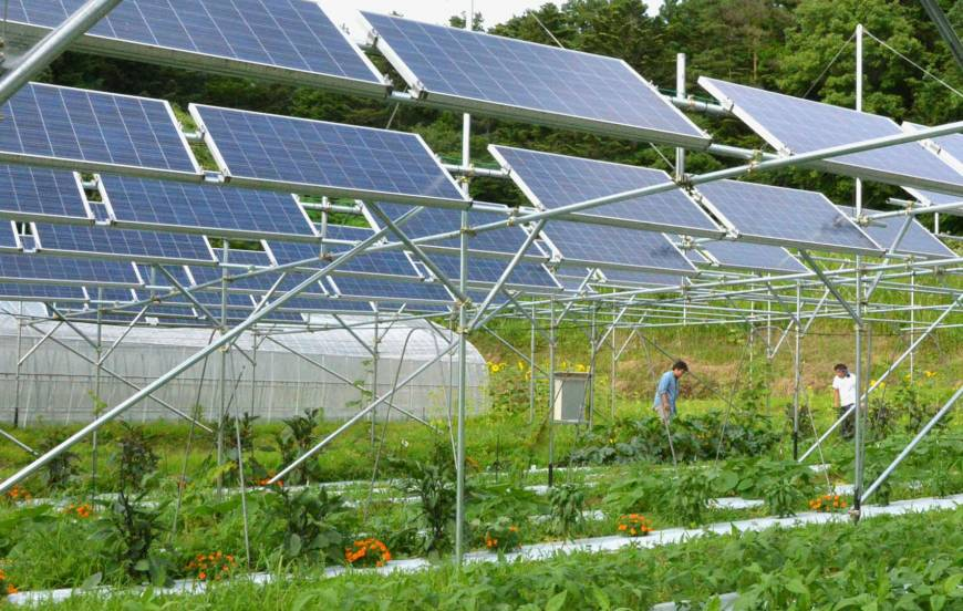 A solar sharing system combines power generation with agriculture on a farm in Fukushima Prefecture.