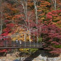 Silver birch trees contrast with maple colors beside a bridge near the town of Nasushiobara, Tochigi Prefecture. | STEPHEN MANSFIELD