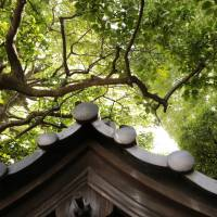 Above from below: Mature trees seen from under the roof tiles of Saizo-in Temple. | KIT NAGAMURA