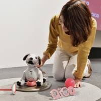 A woman strokes an Aibo robot during a media event at Sony Corp's headquarters in Tokyo on Wednesday. Sony's new robot dog will be available from January. | YOSHIAKI MIURA
