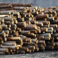 Ottawa weighs NAFTA and WTO options as U.S. finds Canada dumped lumber, slaps duties