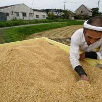 More Japanese livestock farmers using feed rice