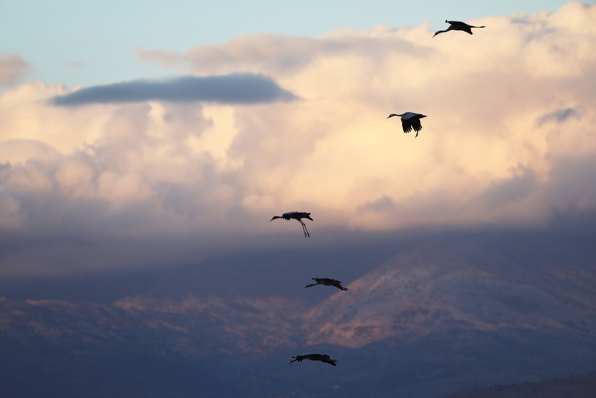Migrating cranes fly over the Hula Nature Park in northern Israel Nov. 22. | REUTERS
