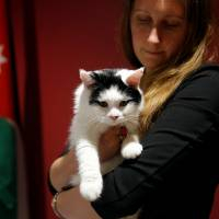 Laura Dauban, deputy ambassador of the United Kingdom to Jordan, poses with Lawrence of Abdoun, the first 'diplocat' to be appointed by the embassy in Amman, on Nov. 15. | REUTERS