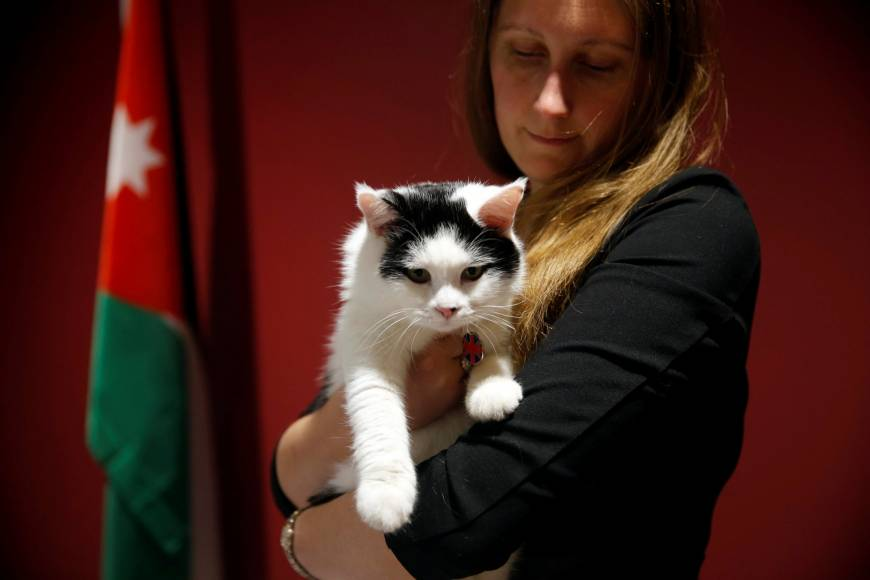 'Diplocat' takes office in Jordan as British Embassy's newly appointed chief mouser
