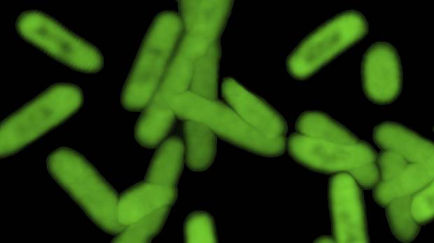 DNA 2.0: Partly synthetic bacteria contain never-seen-before genetic 'letters'