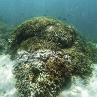 Half of Hawaii's coral reefs suffered bleaching in 2014 and 2015, with worse to come; fish catch has fallen 90% over a century