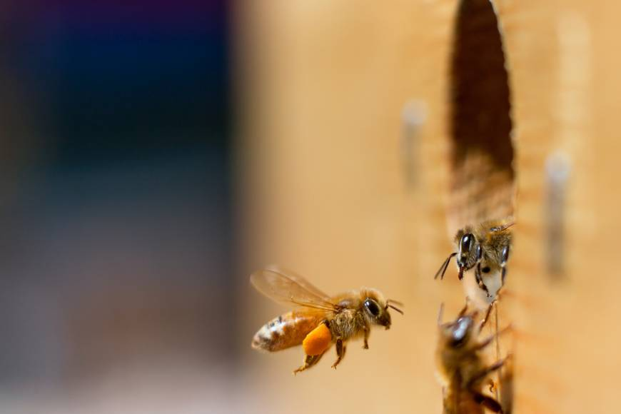 Bee research may redefine understanding of intelligence