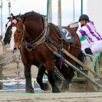 Obihiro Racecourse in Obihiro, Hokkaido, known for racing by horses pulling iron sleds, is one of the stops made accessible by two local bus companies selling unlimited ride passes for foreign tourists. | KYODO