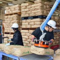 Radiation checks on rice grown in Fukushima Prefecture are conducted in the city of Koriyama in October last year. | KYODO