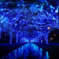 'Tis the season for illumination: Cities across Japan light up for the year's end