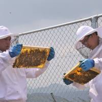 The bee's knees: 'Large airplanes and tiny honeybees both have wings and fly,' says Haruhiko Motohashi (left), president of Iwami Airport Terminal Building Co. Ltd. 'It's an excellent combination.' | COURTESY OF HAGI-IWAMI AIRPORT
