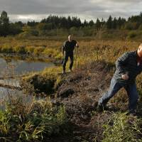 Matt Hofman ( right), the Master Distiller at Westland Distillery, and Steve Hawley, Westland's director of marketing, walk carefully through a peat bog on Washington state's Olympic Peninsula near Sheltonin October. Westland is taking an unusual step for America's booming spirits industry: making a whiskey using smoke from peat grown locally in Washington state. | AP