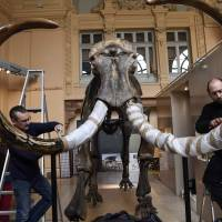 Mammoth skeleton sells for nearly €550,000 at French auction