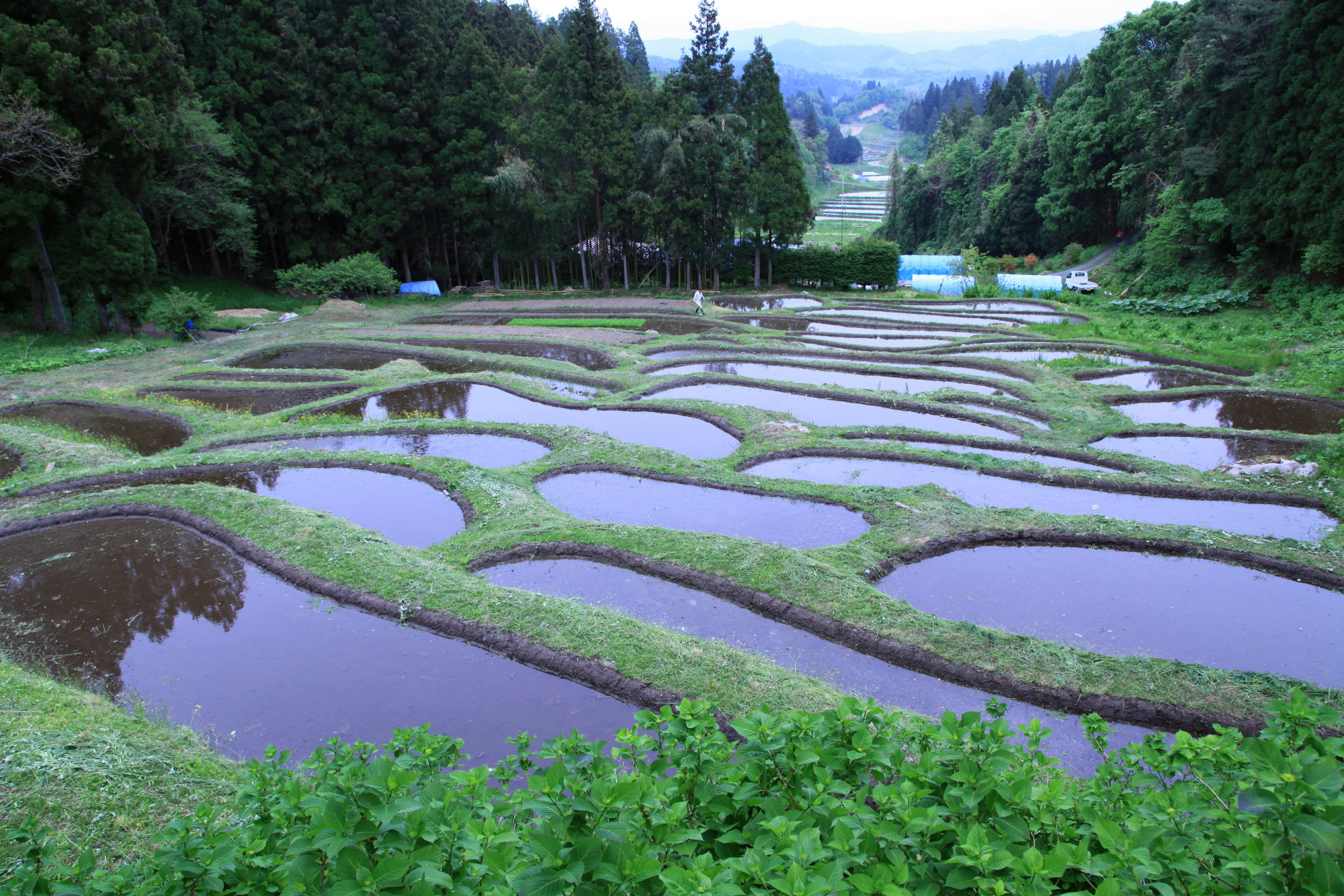 The Kanayama rice terraces come alive with color each autumn just before harvest season begins in late September.   COURTESY OF ICHINOSEKI CITY