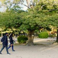 Seeds from trees that survived atomic bombing of Hiroshima to be planted in Oslo garden