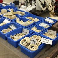 Watchdog urges Tokyo to curb 'rampant' illegal ivory exports to China