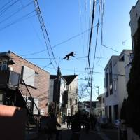 Police and ward officials attempt to catch a monkey on Dec. 12. | COURTESY OF KATSUSHIKA WARD