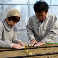 Strong community grows out of high-tech, low-effort shared farm in Kyoto
