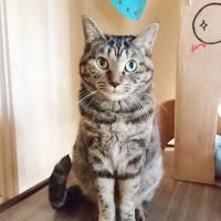 Still waiting: A gorgeous tabby named Family