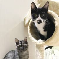 Same but different: Kittens Rapida and Debonnaire