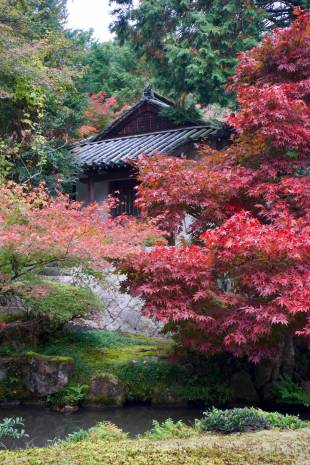 The garden at the back of Daitsu-ji temple in Yakage.