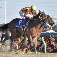 Gold Dream comes home to win the Champions Cup at Chukyo Racecourse on Sunday.   KYODO