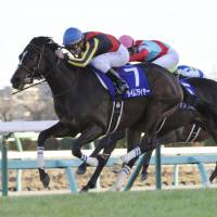 Cristian Demuro rides Time Flyer to a victory in the Hopeful Stakes on Thursday at Nakayama Racecourse. | KYODO