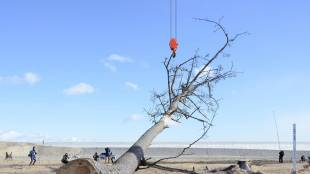 Lonely tree given new purpose
