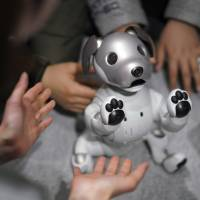 Guests play with Sony's latest Aibo robot at one of the company's showrooms in Tokyo on Thursday, the day the new gadget went on sale. | AP