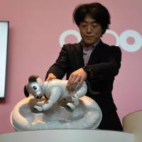 Izumi Kawanishi, head of Sony's AI robotics business group, takes an Aibo out of a cocoon during a 'birthday ceremony' Thursday in Tokyo held for new owners who pre-ordered the robotic canine. | AFP-JIJI
