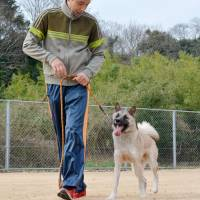 Takku, a 1-year-old mixed breed on the verge of being put down at an animal shelter after his owner abandoned him, takes police dog lessons from his trainer, Takashi Sueoka, on Dec. 30 in Yamaguchi Prefecture. | KYODO