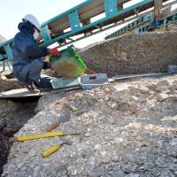 Rare prehistoric shell mound in Aichi, Japan, suggests possible mid-Jomon shell trade