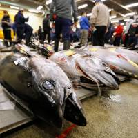 Wholesalers check the quality of fresh tuna displayed at the Tsukiji fish market before the New Year's auction in Tokyo Friday.   REUTERS