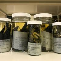 Woodpeckers preserved in alcohol at the Field Museum in Chicago. | REUTERS