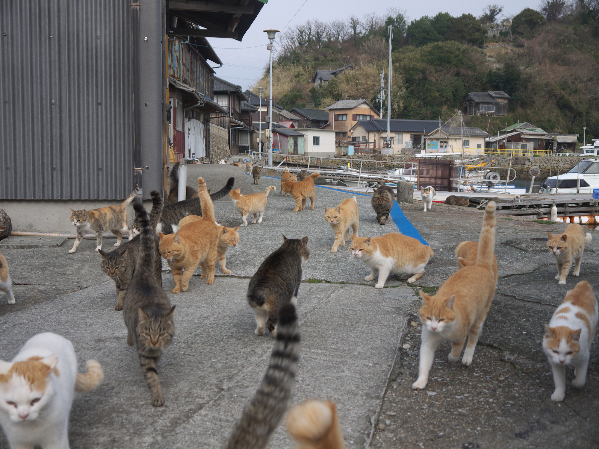 The 22nd of February is Neko No Hi (cats' day) in Japan, and some prestigious Japanese companies — including Sharp Corp. and Tanita  Corp. — have surprised the public by rebranding themselves on a feline theme to capture the heart of cat-loving potential customers. | GETTY IMAGES