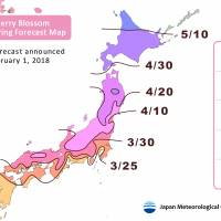 Japan's cherry blossom viewing may come early this year, says weather forecasting firm