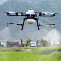Drones playing bigger role in Japanese crop management